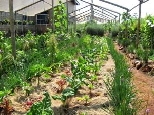 DBEP Garden